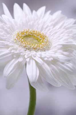 flores Tanatorio Salamanca