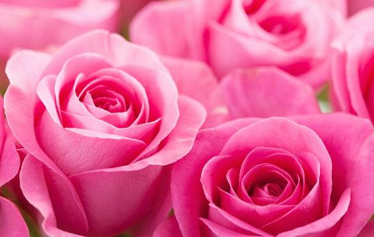 Rosas para funerales